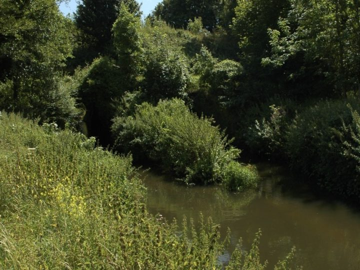 Little Avon River Report